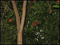 images/stories/galeria/akcjazima2011/640_IMG_0904.JPG